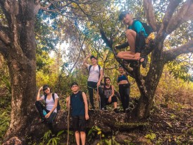 Mango tree mowdeling